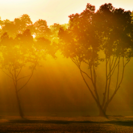 Morning Glory by Steven De Siow - Nature Up Close Trees & Bushes ( nature, morning light, tree, morning, light )