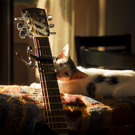 Lady's and Gentlemen, on Guitar, Key of E , please welcome Cat Stevens, I mean Clark.  by D Clark  / B  Worthington - Animals - Cats Kittens ( kitten, cat, guitar )