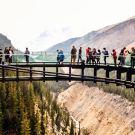 Sky Walk by Joseph Law - Buildings & Architecture Bridges & Suspended Structures ( peoples walking across, national park, suspended bridge, sky walk, on the rocky mountains, in jasper, transparent, structures )