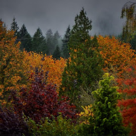 North Cascades by Lavonne Ripley - Nature Up Close Trees & Bushes (  )