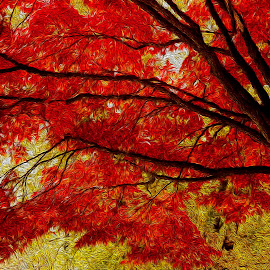 Autumn fire by Gene Myers - Digital Art Things ( red, nature, autumn, fall, trees, virginia, yellow, leaves, limbs, gene myers )
