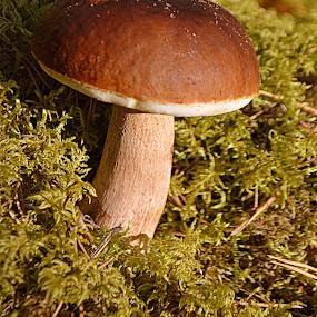 by Vida Jankaitiene - Nature Up Close Mushrooms & Fungi