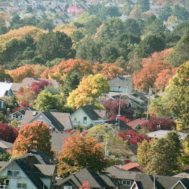 Fall Colours from Gonzales Hill by Cory Bohnenkamp - City,  Street & Park  Vistas