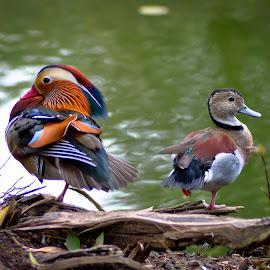 by Darrell Raw - Animals Birds