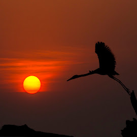 Fly at dawn by Mukesh Chand Garg - Landscapes Travel (  )