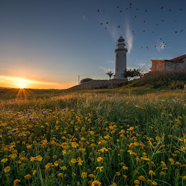 Pafos Lighthouse by Raad Roger - Buildings & Architecture Architectural Detail ( pafos, hdr, d800, lighthouse, sunrise, flare, flowers, nikon, birds, sun, cyprus )