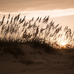 Sunset on the Dunes by Lori White - Landscapes Beaches ( dunes, outer banks, sunset, ocracoke island, north carolina beaches, ocean, beach )