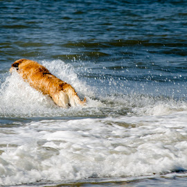by Tamar Epstein - Animals - Dogs Playing