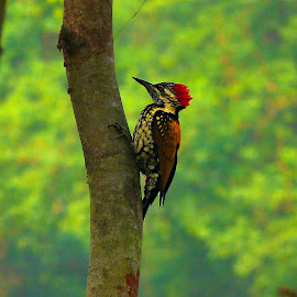 nestless by Bikash Roy - Novices Only Wildlife