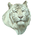 White Tiger Head Sticker icon