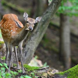 by Davorin Munda - Animals Other Mammals ( a )