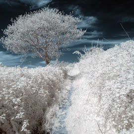 Cold, bright by Dave Livsey - Landscapes Forests ( england, sky, tree, nature, infrared, devon, surreal )