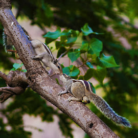 Kiss by Havneet Singh - Animals Reptiles