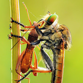 by Harry Aiee - Animals Insects & Spiders