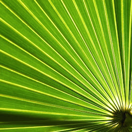 Sun and Palm by Mary Gemignani - Nature Up Close Trees & Bushes (  )