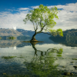 Centrepiece by Nick Mcilroy - Landscapes Waterscapes ( canon, reflection, 60d, nicks.place, landscape, photography, eos, tree, nature, www.nicksplace.co.nz, weather, fine, water, green, white, lake, photo, new zealand, photos, south island, blue, canon 60d, branch, cloud, nicksplace )
