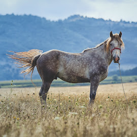 Freedom is an illusion by Silviu Mihai Căţoiu - Animals Horses