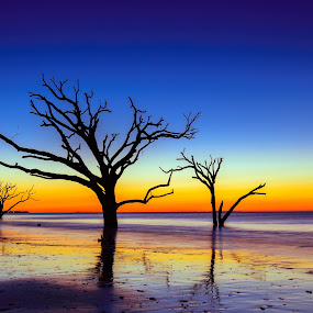 Intense Sunrise at Botany Bay by Serge Skiba - Landscapes Waterscapes ( shore, reflection, basin, lowcountry, botany, wildlife, ocean, travel, beach, landscape, atlantic, boneyard, coast, photography, island, adventure, charleston, sky, edisto, nature, tree, movement, surf, dead, water, clouds, sand, isolated, sea, sc, horizon, tourism, ace, coastal, bay, carolina, blue, outdoors, wave, south, sunrise, natural )