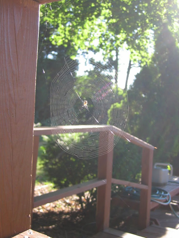 Spider Web on Hilltop Drive
