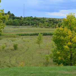 by Shannon Barr - Landscapes Prairies, Meadows & Fields