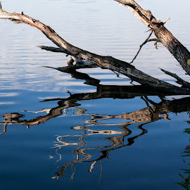Reflections by Dale Pausinga - Nature Up Close Water ( water, reflection, branch )