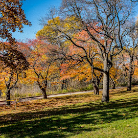 If I could paint by Jack Brittain - City,  Street & Park  City Parks ( canada, autumn, toronto, ontario, high park, landscape, leaves )