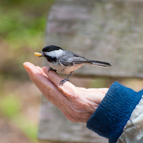 A hand up by Carolyn Holland - Animals Birds
