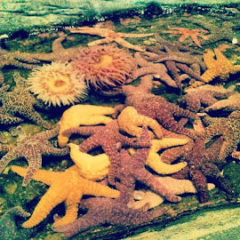 i want some! #starfish #seattleaquarium #itouchedthem #awesome by Brandi Wright - Animals Sea Creatures