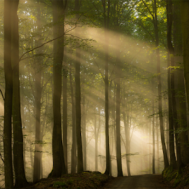 Rays over my way by Peter Samuelsson - Nature Up Close Trees & Bushes