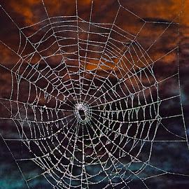by Bruce Cramer - Nature Up Close Webs (  )