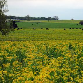 Flower Field by Jamie Hodge - Landscapes Prairies, Meadows & Fields ( trees, storm clouds, landscape, flowers,  )