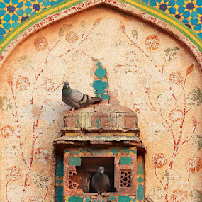 Mughal Era by Sheraz Mushtaq - Buildings & Architecture Public & Historical ( qila, pigeons, home, sitting, lahore, decorative, fly, fort, wall )