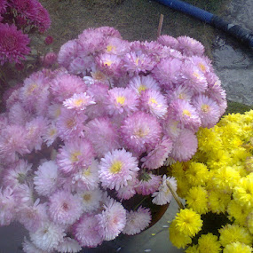 THE VIOLET  VIGOUR by Jayita Mallik - Flowers Flower Gardens