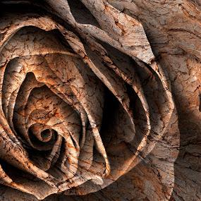 Barking Rose by Nicolas Raymond - Digital Art Things ( fancy, detail, wood, petals, bright, yellow, glow, weathered, contrast, photomanipulated, monochromatic, macro, tree, nature, curling, bark, maroon, curls, black, flower, petal, orange, curled, worn, texture, art, white, monotone, somadjinn, barking rose, rose, contrasted, trunk, rosa, delicate, textured, contrasts, floral, sepia, monochrome, ornate, contrasting, twirls, digital, curves, details, nicolas raymond, detailed, cracked, swirls, closeup, photomanipulation, flora, elegance, woods, close up, manipulation, close-up, cracks, wooden, manipulated, elegant, background, brown, glowing, wear,  )
