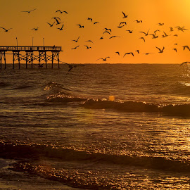 Flock of Seagulls by Carol Plummer - Landscapes Beaches ( nature, pier, seagulls, ocean, sunrise, beach, landscape, birds,  )