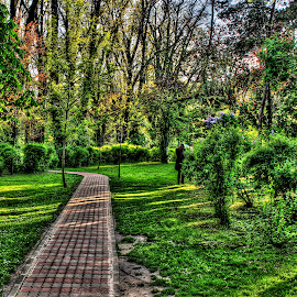 A walk in the park by Alin Militaru - City,  Street & Park  City Parks ( nature, park, trees, road, walk, man, city,  )
