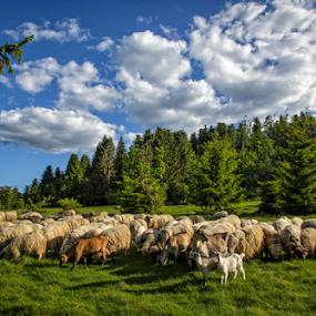 Good company by Stanislav Horacek - Landscapes Prairies, Meadows & Fields