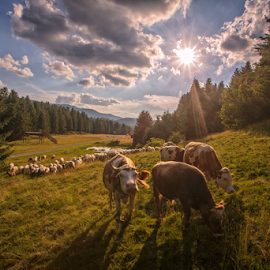 Going and grazing by Stanislav Horacek - Landscapes Prairies, Meadows & Fields