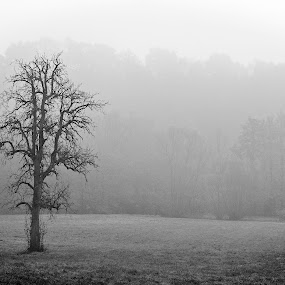 Lonely tree by Gerd Moors - Black & White Landscapes ( grassland, tree, black and white, serene, meadow, white, landscape, bare, black, mist,  )