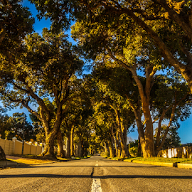 Helderberg Collage Road by Clifford Wort - Nature Up Close Trees & Bushes ( trunk, sky, tree, grass, sunset, road,  )