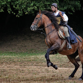 A galope by Ana Silva - Animals Horses