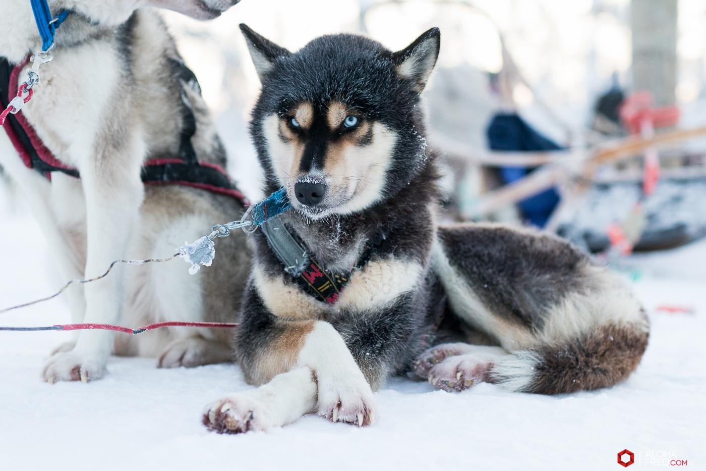 0006 - alohafred Laponie - 6R1A6254