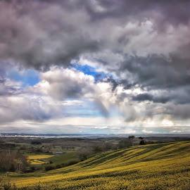 Rain shower over Yellow fields  by Kelly Murdoch - Landscapes Weather ( clouds, ztam photography, land, dark, weather, shower, view, yellow, flowers, rain, ztam, fields,  )