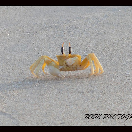 by Narasimha Murthy - Animals Sea Creatures