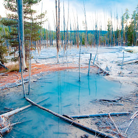 Thermal Pool by Kimberly Sheppard - Landscapes Forests ( blue, pool, yellowstone national park, trees, dead tree )