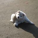 Cute Whity