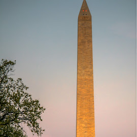 Washington Monument at Dawn by Nancy Young - Buildings & Architecture Statues & Monuments ( dawn, washington monument, monument, washington dc, 2010, sunrise, architecture, travel, capitol )