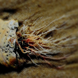 artificial jellyfish by Lisa J Morgan - Nature Up Close Sand (  )