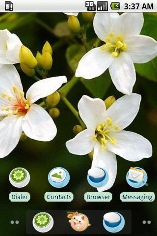White Tung Blossom_SQTheme_ADW