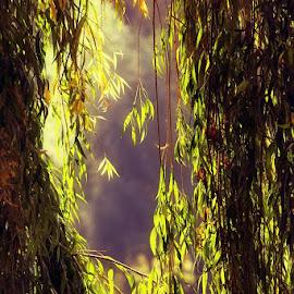 *** by Valentyn Kolesnyk - Nature Up Close Leaves & Grasses